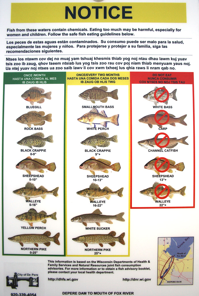 Which fish is good to eat best fish 2017 for What fish is good for you