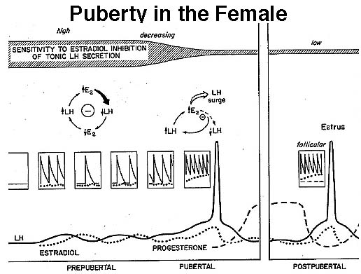 Pictures or Diagrams From Lecture8: Puberty