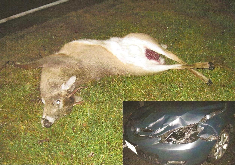 Reproductive Seasonality in Deer